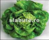 Imagine Salata verde
