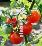 Poza (imaginea) pentru calorii Rosii, rosii, coapte, crude