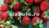Poza (imaginea) pentru calorii Fragi de padure