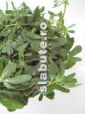 Poza (imaginea) pentru calorii Iarba grasa (Portulaca oleracea)